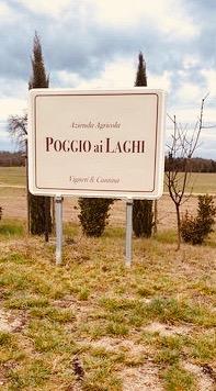 Poggio-ai-laghi-winery